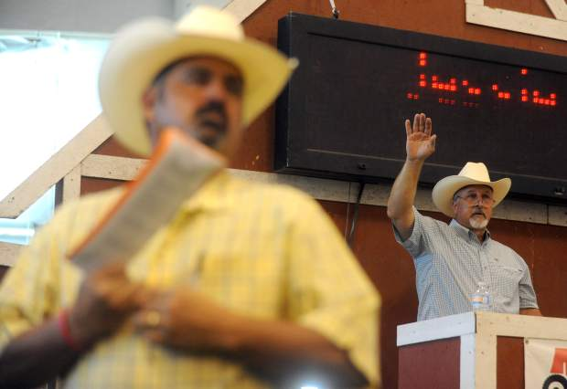 Mike Olearnick gets a little help as he keeps track of the bids during the Weld County Fair Junior Livestock Sale in early August at the Island Grove Events Center in Greeley. Olearnick oversaw the hundreds of auctioned animals during the sale.