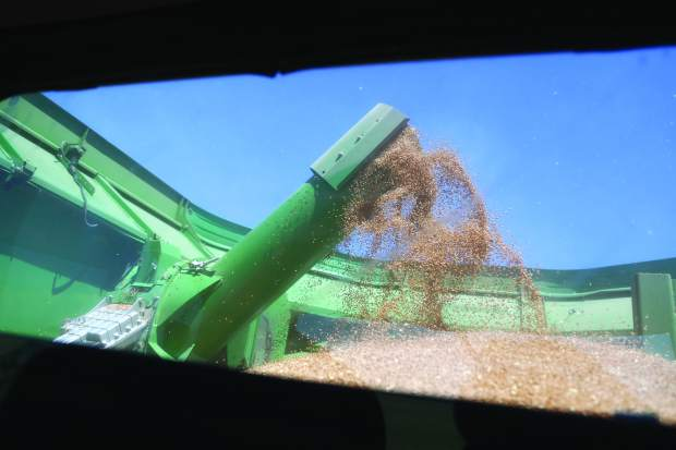 Wheat is harvested last month at one of the fields of Arnusch Farms in Keenesburg.