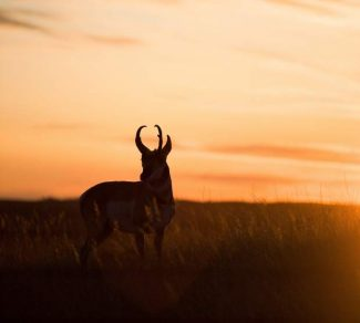 Drought and rain may impact hunting season depending on the area