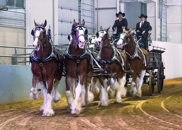 This beautiful six-horse hitch Of Clydesdales from the Crushin' Trance Farm and Bud Miller the driver. The Crushin' Trance team made the trip down from Douglas, Wyoming, to the Rolling Thunder Draft Horse Show at The Ranch in Loveland, Colorado.