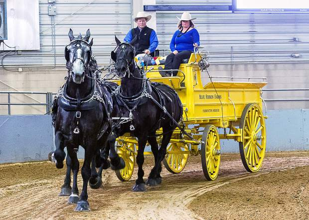 This is called a Unicorn hitch. When the load was too much for two horses, a third was added to essentially give it more horsepower. This hitch and wagon belongs to Blue Ribbon Farms in Missouri. They won this class and also the six-horse hitch class at the Big Thunder Draft Horse Show in Loveland, Colorado.
