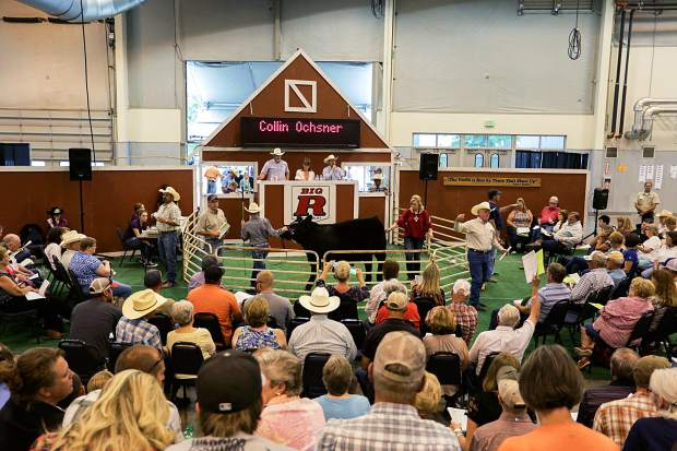 Collin Ochsner parades his cow around the auction floor at the Junior Livestock Sale in Greeley on Monday, Aug. 3, 2015.