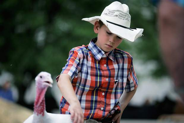 Logan Ries, 9, prepares to sell his first turkey at the Junior Livestock Sale in Greeley on Monday, Aug. 3, 2015.