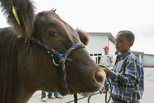 Colton Steinke, 10, tends to his cow, Chaco, after selling him at the Junior Livestock Sale in Greeley on Monday, Aug. 3, 2015.