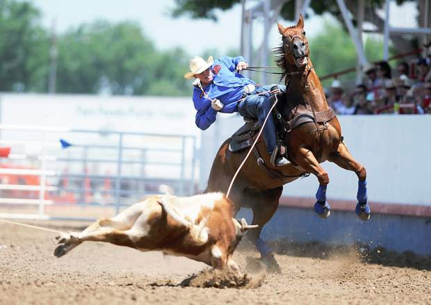 Doyle Hoskins' horse rears back as his partner, Wyatt Cox, tightens his rope around a steers back legs during the team roping competition at the Greeley Stampede finals Saturday in the Stampede Arena. Hoskins and Cox finished with a time of 7.1 seconds.
