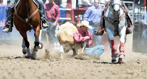 Horses sprint away from Cole Edge as he works to bring down a steer during the steer wrestling finals at the Greeley Stampede on Saturday in the Stampede Arena. Edge finished in 4.1 seconds taking first.