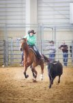 Sarah Kucera from Palmer, Nebraska moves quickly to rope her team's steer in the tie down event at the 2016 Women's Ranch Rodeo Association World Finals Rodeo in Loveland, Colo. Kucera is a member of the Too Hard To Handle Team of Nebraska and Kansas.