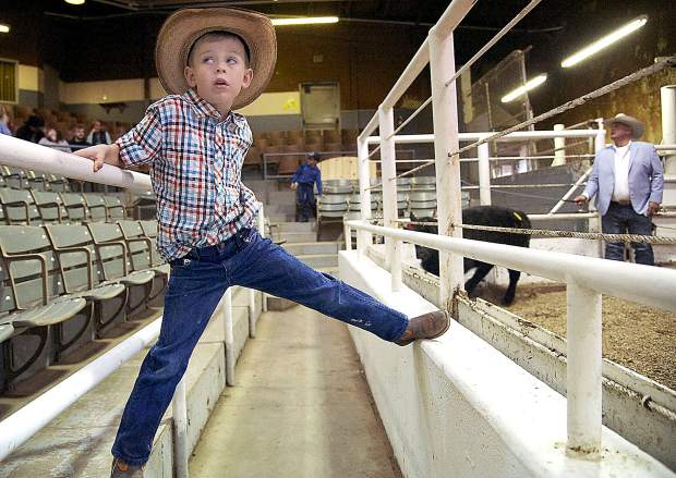 Preston Pebler, 6, hangs out at the 18th annual Boys & Girls Clubs of Weld County Calf Auction on Saturday at the Producers livestock auction in Greeley. The auction also honored longtime Greeley Tribune agriculture reporter Bill Jackson.