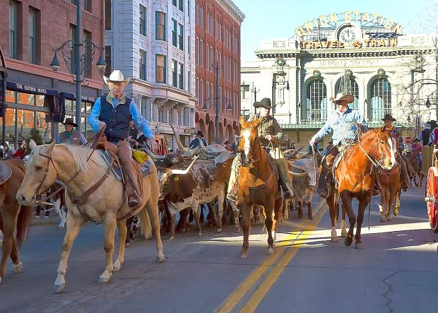 Stan Searle (L) leads some of the Searle Ranch Longhorns through downtown Denver during the parade to kick off the annual National Western Stock Show.