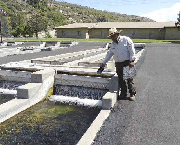Hotchkiss fish hatchery helps keep trout population strong for Fish hatchery jobs