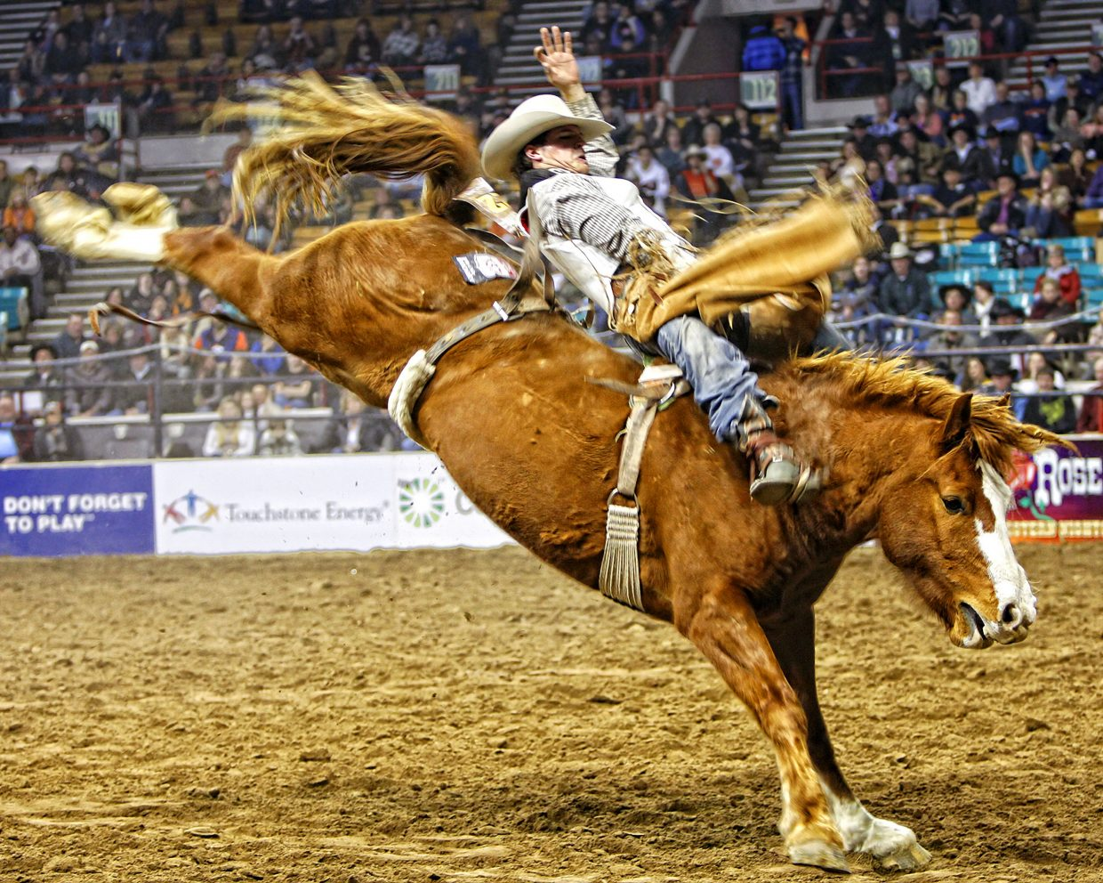 Richie Champion scored 87 points on Cervi's Hell's Fire Hostage during the final head-to-head round to win the bareback riding event at the 2nd annual Colorado Vs. The World rodeo at Denver's 2013 National Western Stock Show (January 12, 2013). It was Champion's first big money check in his career.