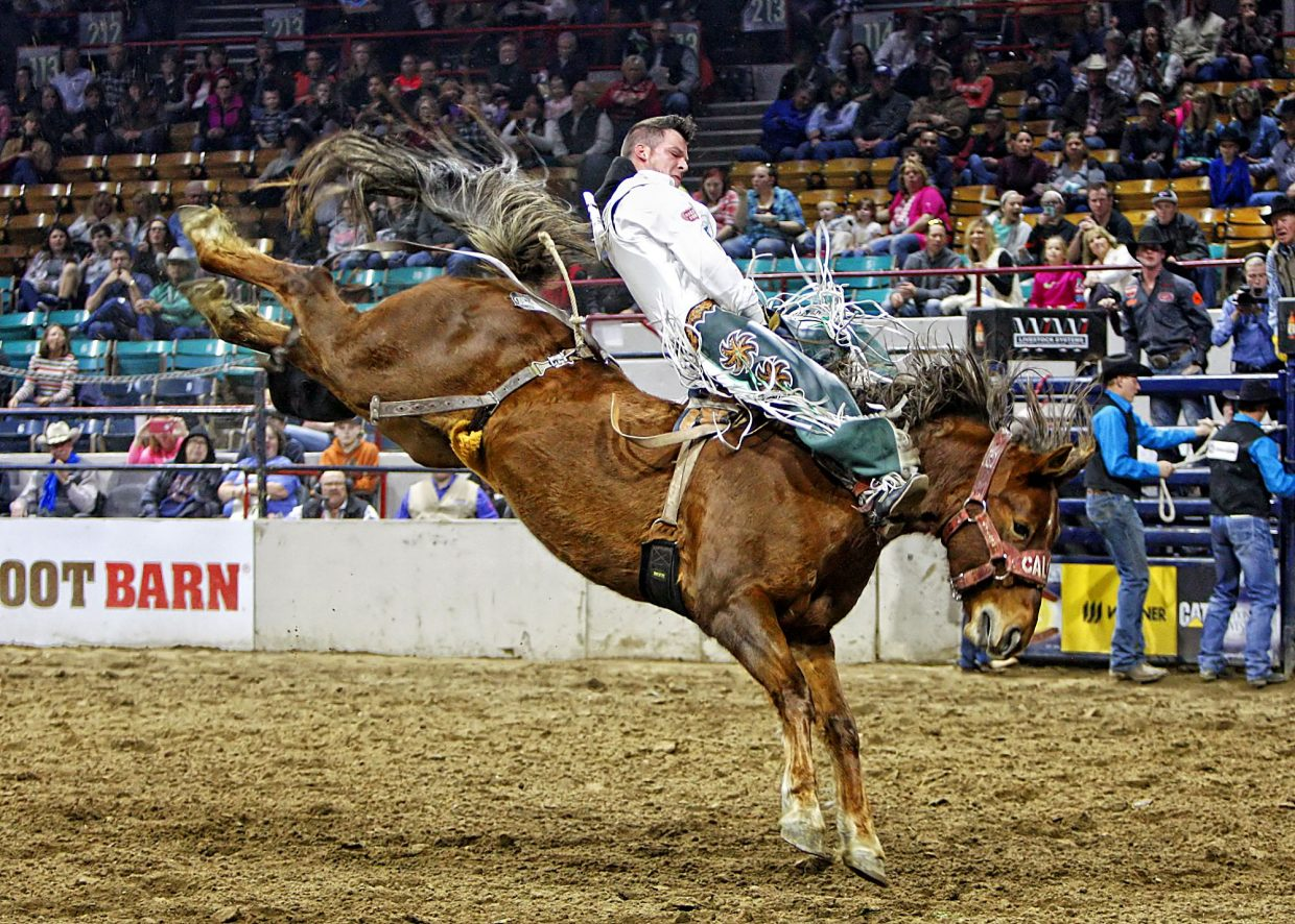 Texas bareback cowboy Richie Champion scored 85 points aboard high-flying Calgary Stampede Rodeo Company's Tootsie Roll to win the Friday afternoon performance at the 2017 National Western Stock Show in Denver, CO (January 13, 2017).