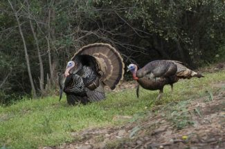 Proper hunting practices increase success