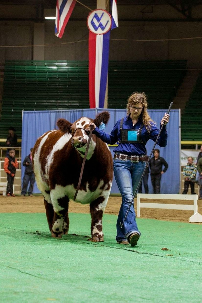 Colorado Cowgirl Helps V8 Ranch At The Houston Livestock