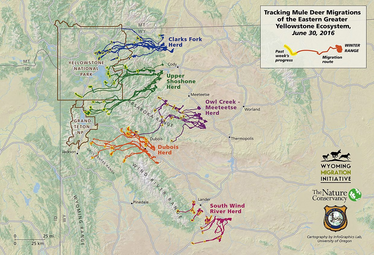 Map of mule deer migration in the eastern Yellowstone area.
