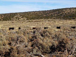 Executive Order gives ranchers hope that governmental land-grabs will be reversed