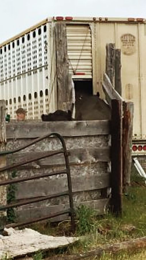 Livestock Haulers Headed To Dc To Protest Electronic Logging