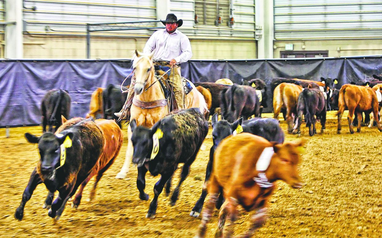 One of the working ranch cowboys worked on separating the right calves from the group during the Team Penning event in slack competition on Friday afternoon (June 2) at the 2017b Rock'n Western Rendezvous at The Ranch in Loveland, Colo.