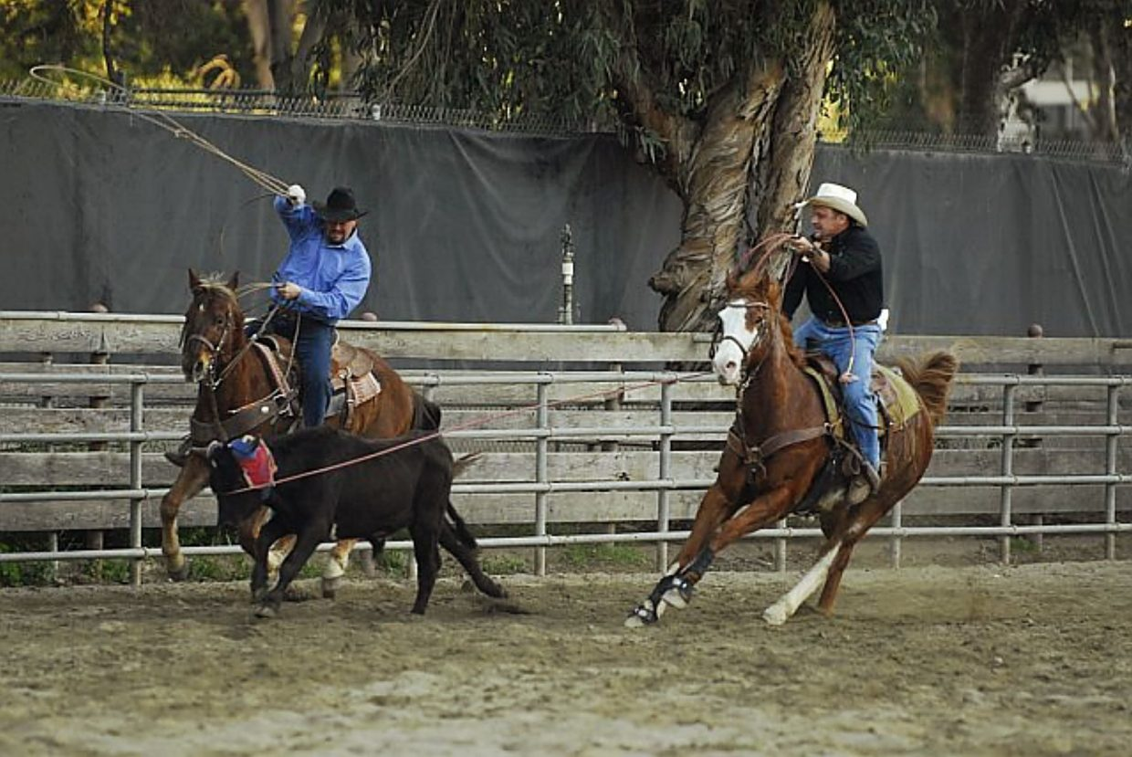 Matt Wassam, left, attempts to rope a steer's hind legs in a team roping competition.