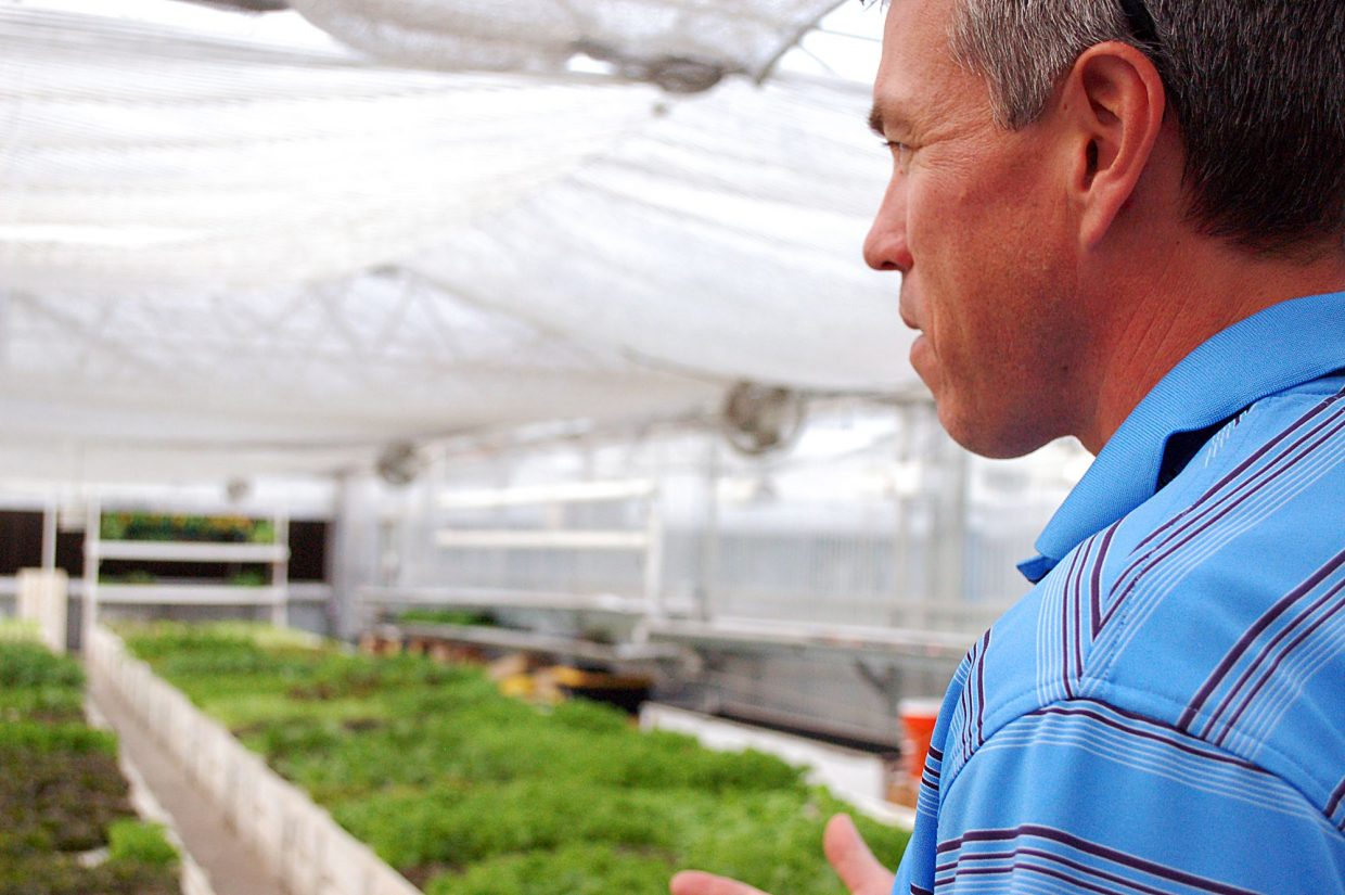 J.D. Sawyer, who founded Colorado Aquaponics with his wife, Tawnya, peers out over the rows of leafy greens growing in The GrowHaus' aquaponics farm. The Sawyers started the farm in 2012, then in Fall 2016, sold it to The GrowHaus to continue running.