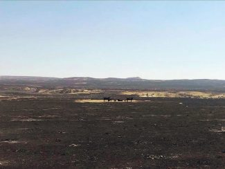 LO Cattle Co. in Garfield County, Montana, lose hundreds of cattle in fire