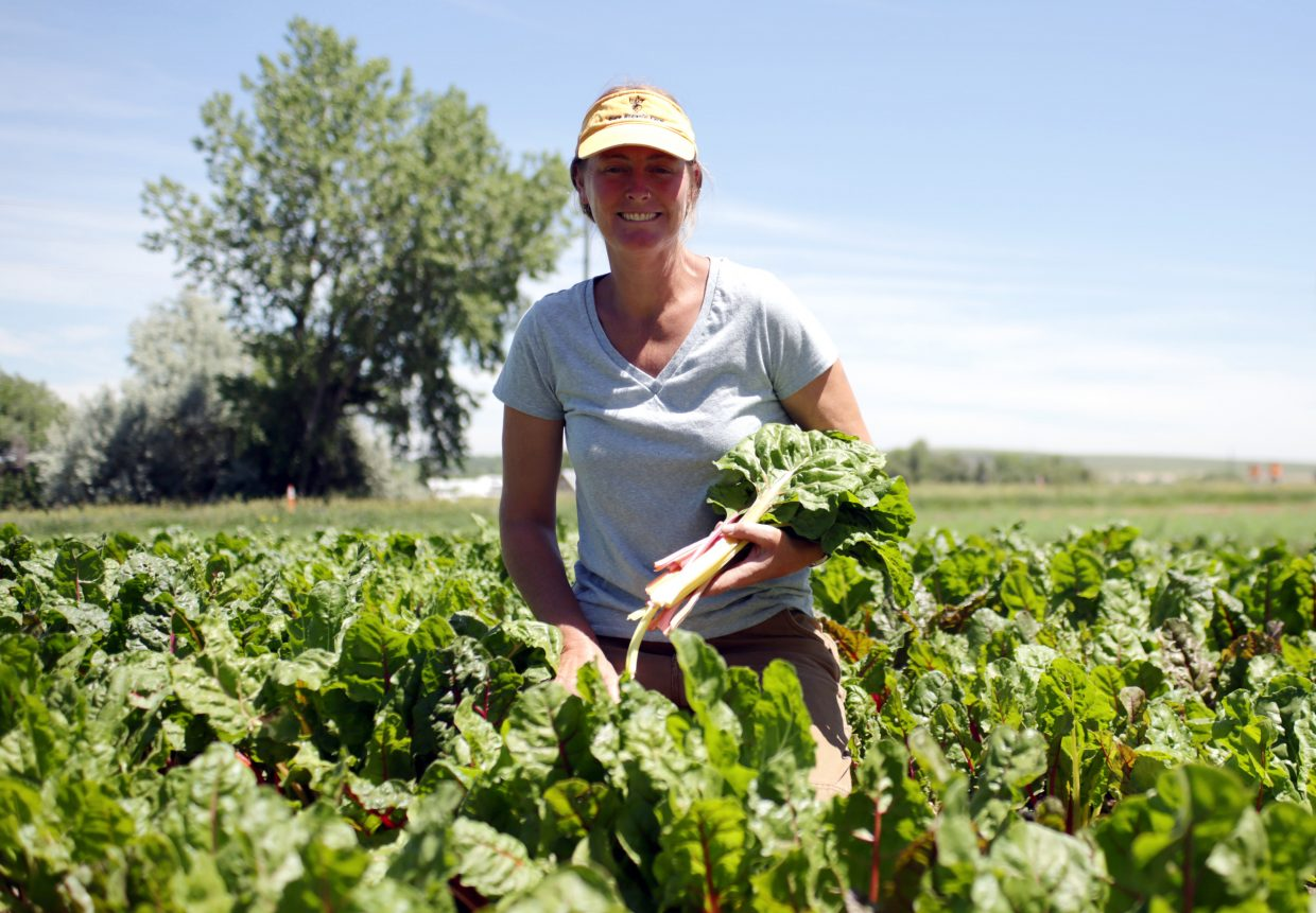 Anne Cure, harvests chard on Thursday in one of the fields at her organic farm in Boulder. At the farm, Cure, her interns and volunteers grow all different types of organic produce and meat as well.