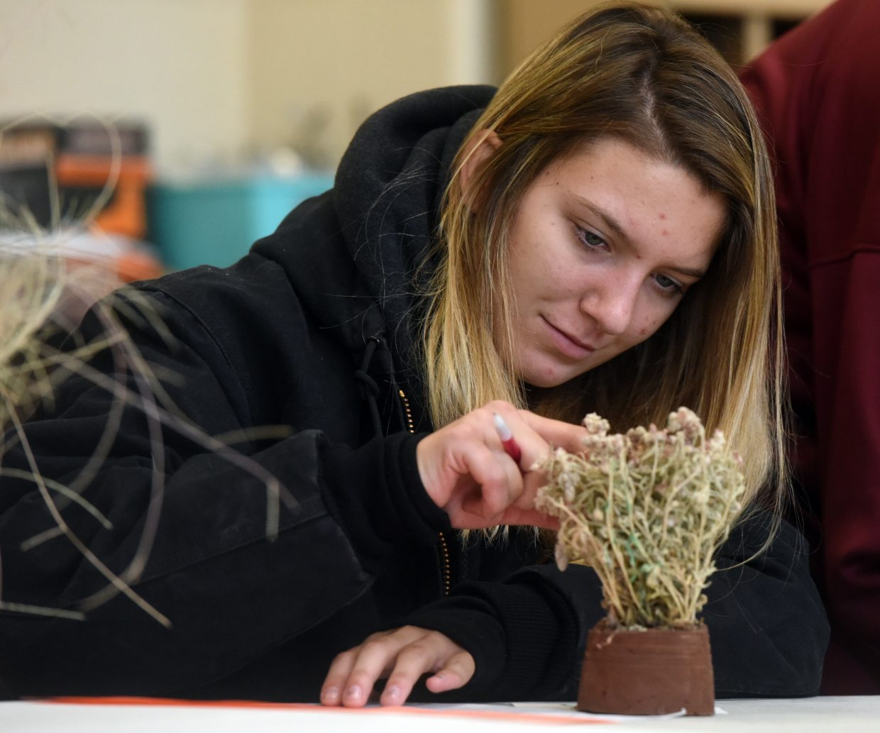 Ashley Scott, 15, pokes one of the plants that she has to identify during the range judging contest at Prairie School in New Raymer, Colo.