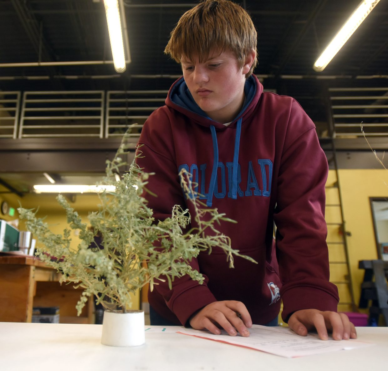 Cody Legg, 15, glances down at one of the plants he is supposed to identify during the rangeland contest at Prairie School in New Raymer, Colo.