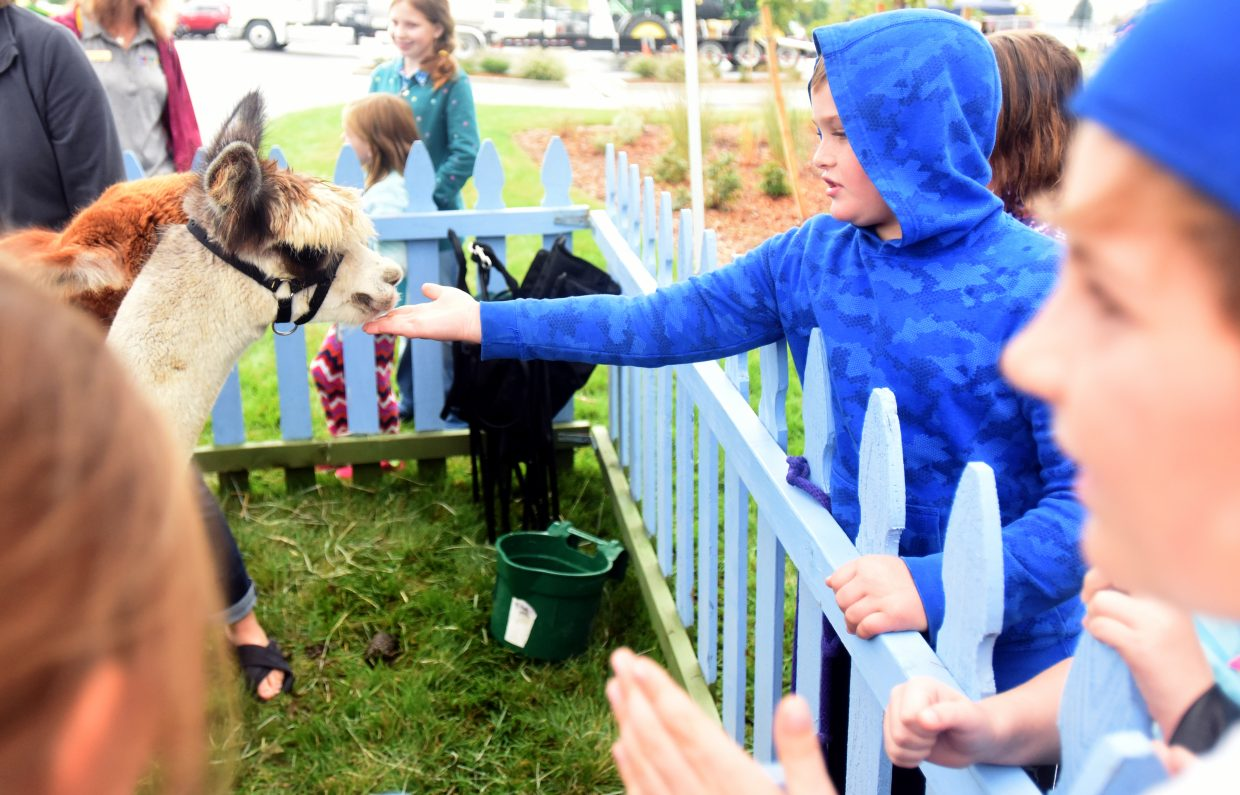 Wyatt Chase, 9, reaches to feed the alpaca at the agriculture education fair on Sept. 25 at the Windsor Recreation Center in Windsor, Colo.