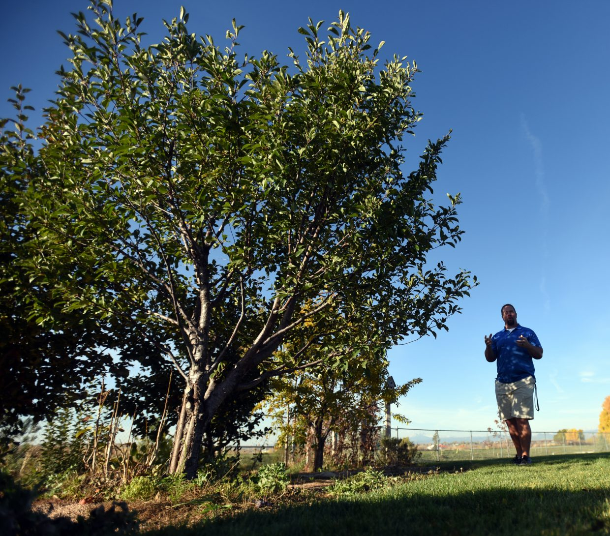 Trees rise above Andy Klatt as he stands in the shadow of the miniature orchard at Grandview Elementary in Windsor.