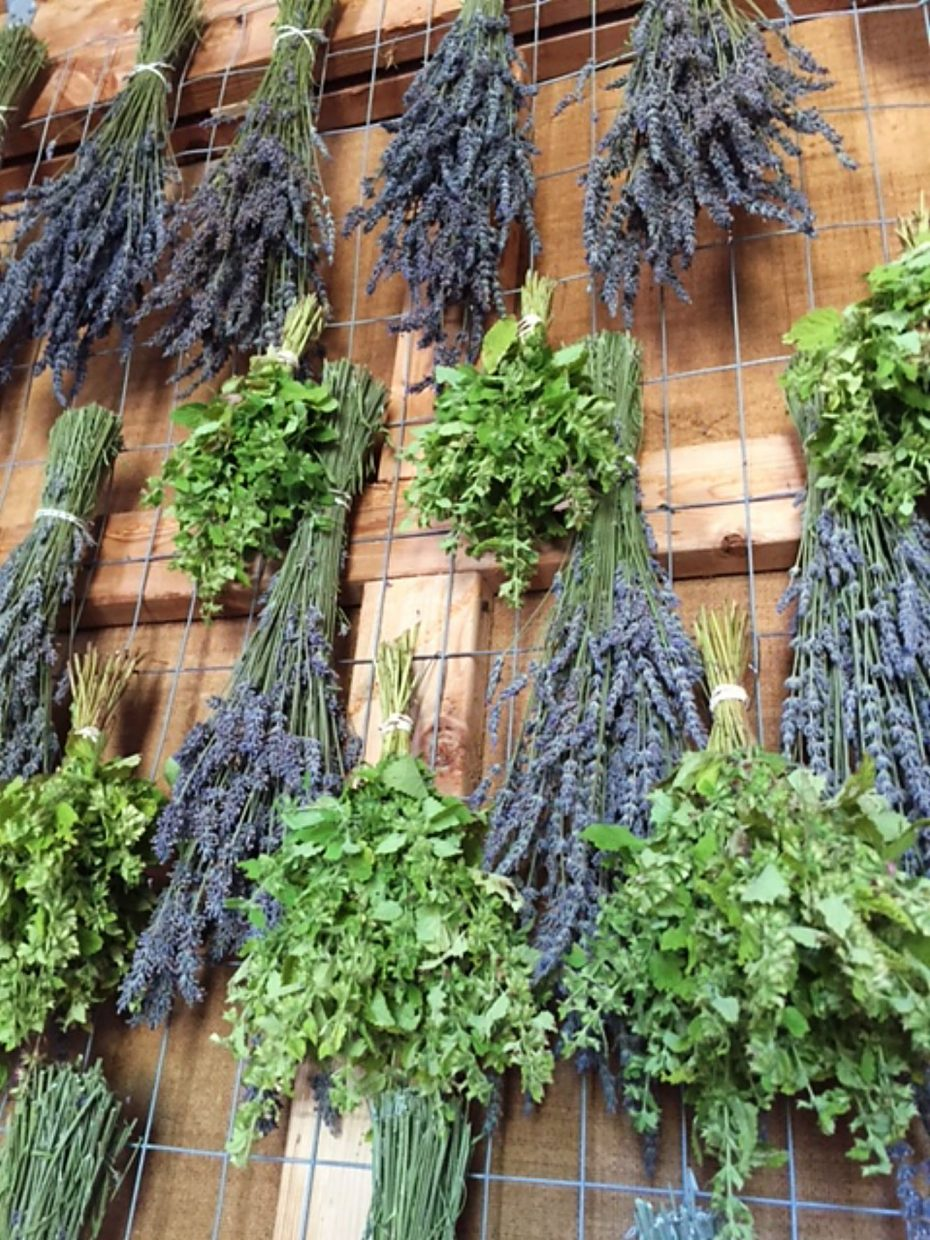 The drying shed provides the perfect environment for Heritage Lavender's preparation for sale as bouquets, aromatic buds or culinary lavender.