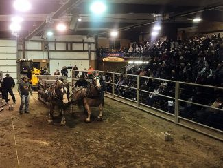 Iowa sale barn pulls draft horse buyers from across US and Canada