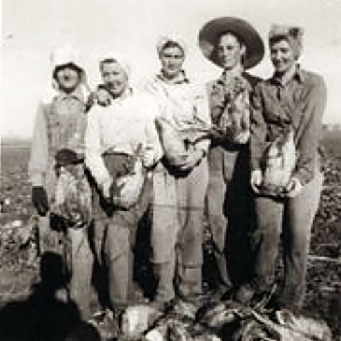 Women wore canvas pieces on the front of their pants so the pants wouldn't wear out while crawling down the beet rows. Left to right, Emmaline Rutz, Mollie Hettinger, Esther Kisselman, Emma Stroman and Leona Hettinger.