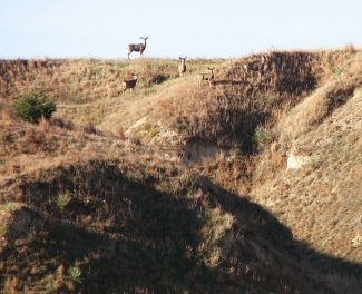 Changing times: Landowners increasingly rely on hunting lease managers