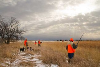 Bird Weather: Weather factors affect bird populations and hunting success