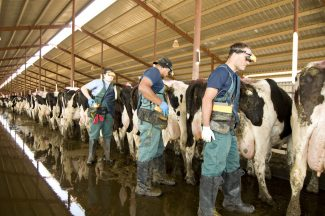 Breeders Connection 2019: Up to their armpits in success–Colorado training center focuses on innovation in bovine reproduction