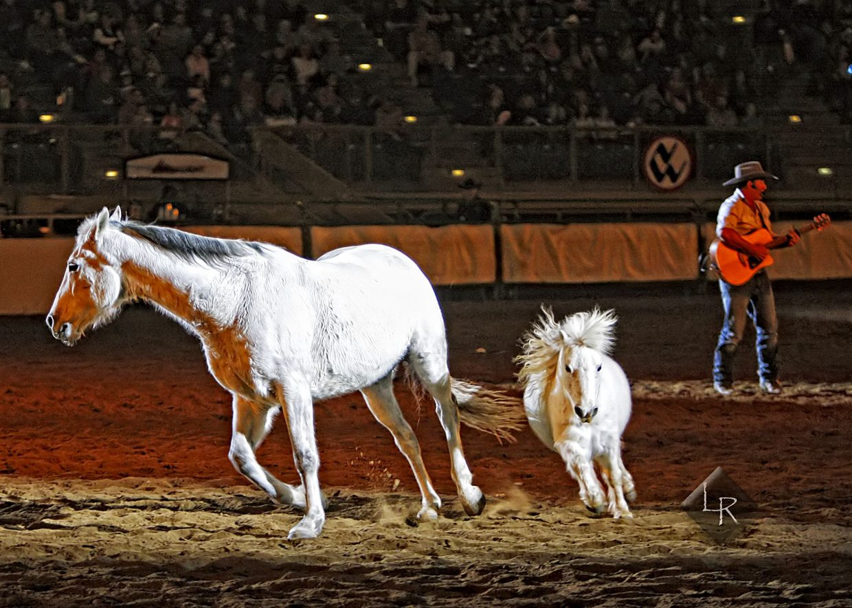 It wouldn't be NWSS Wild West Show without horses, and the audience was treated to equines of all sizes during Saturda's (Jan. 19) performance at the 2019 National Western Stock Show. In this photo, a rendition of the song Waltzing Matilda was played in the arena while the lyrics were dramatized by horses and rider.