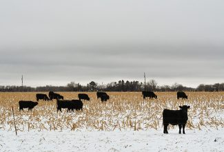 'Prayers and Perseverance' Nebraska vet says worst of livestock health effects still to come