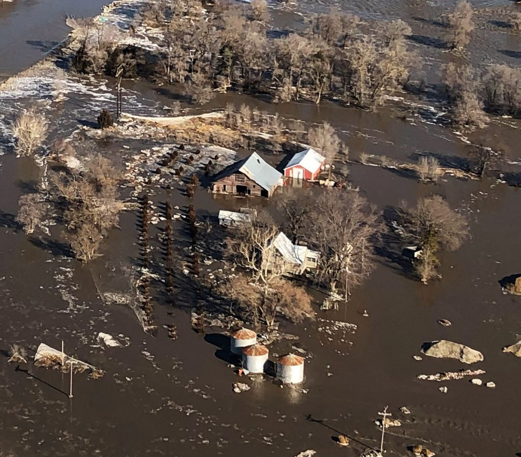 Aftermath of the flood – ongoing health issues in livestock