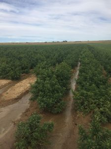 Hemp is changing the value of farm ground