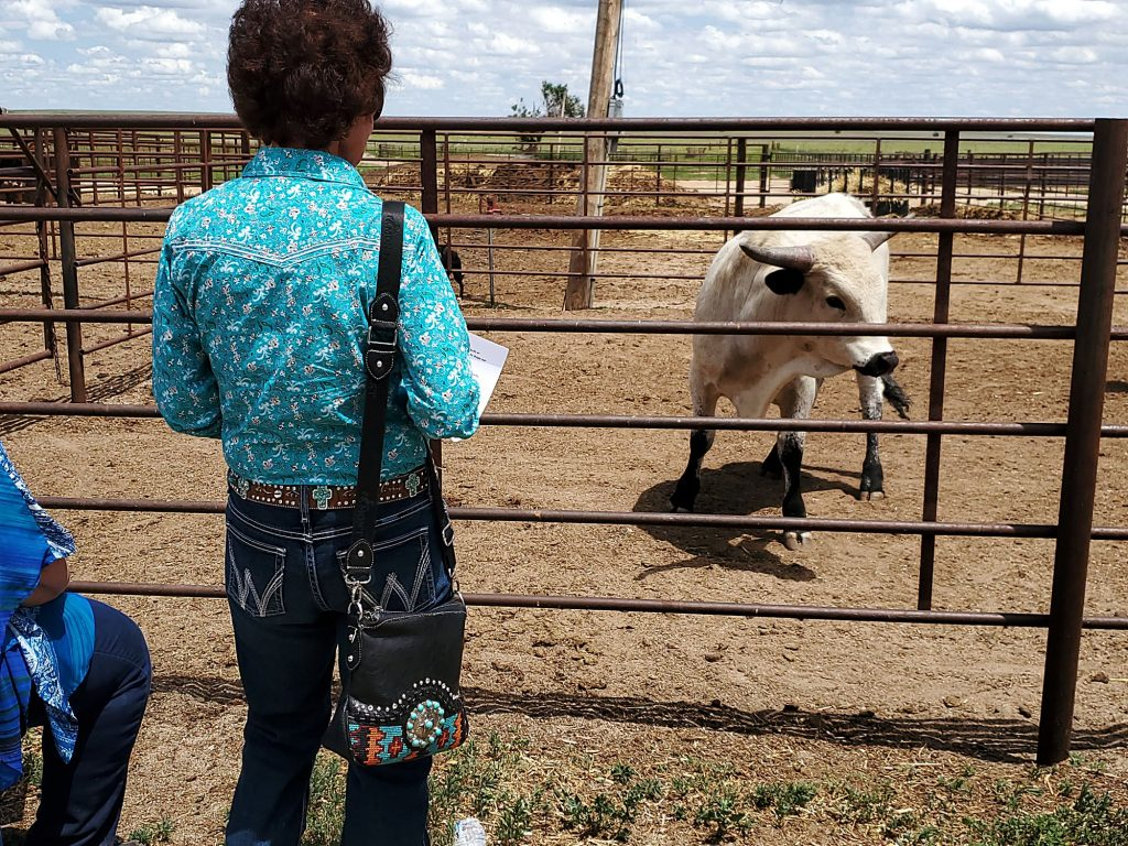 Freeman Ranch brings longhorn producers together