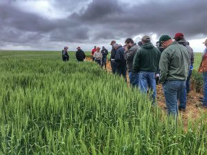 High yields expected despite cool temps in Colo.