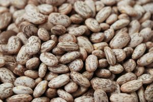 Study sheds light on how pinto beans help reduce cholesterol